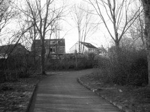 bloemkoolwijk-2
